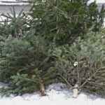 Going Green With Kids – How to Recycle Your Christmas Tree