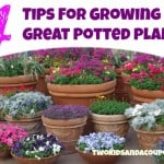how to grow plants