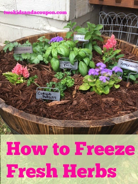 Freeze Fresh Herbs