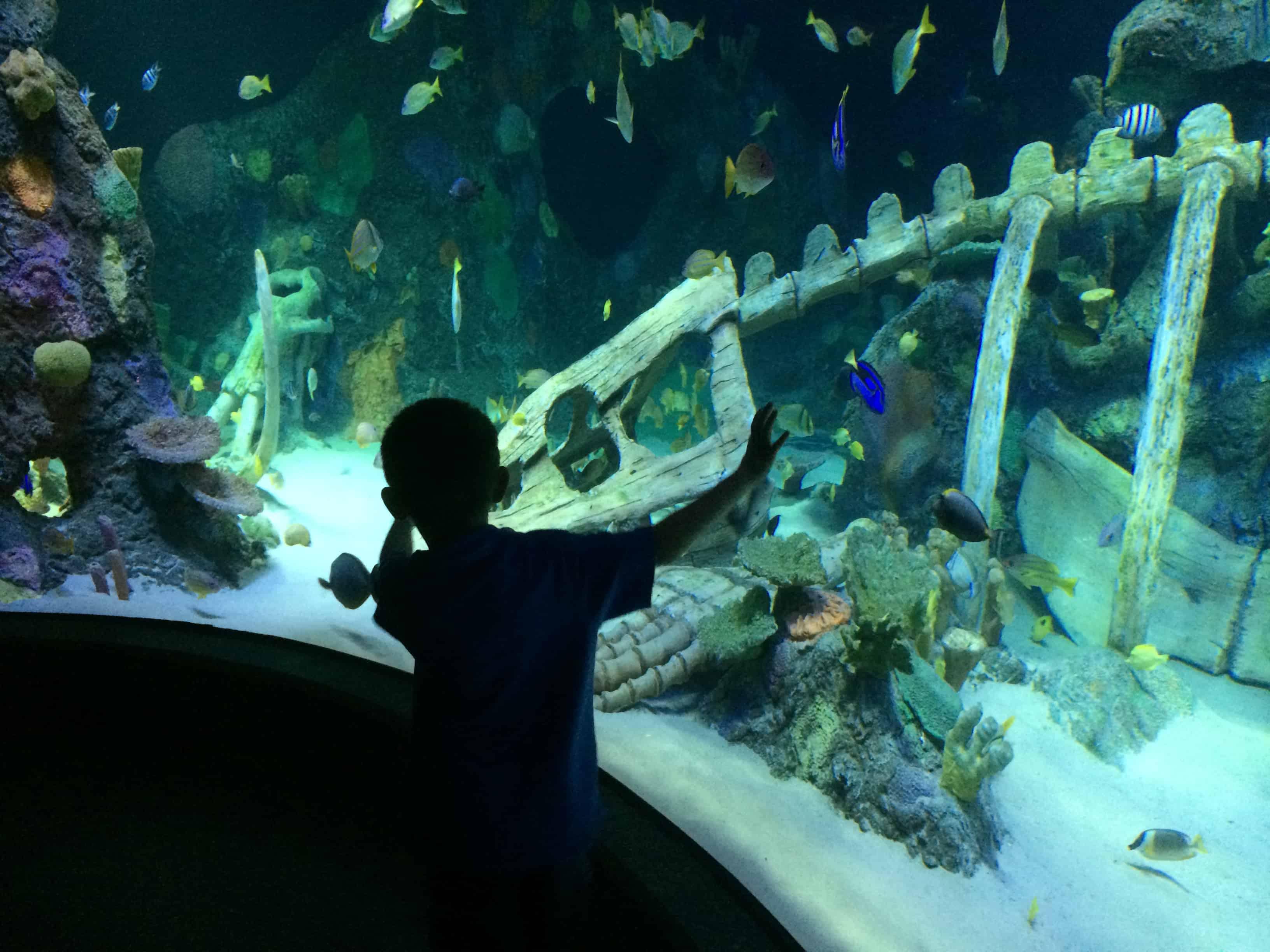 Fun, Family Travel - Sea Life Aquarium Kansas City Review ...