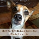 How to tell if kids are ready for a pet