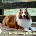 5 Tips for Traveling With Your Pet