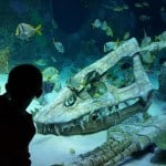 Family Attractions Kansas City Sea Life Aquarium