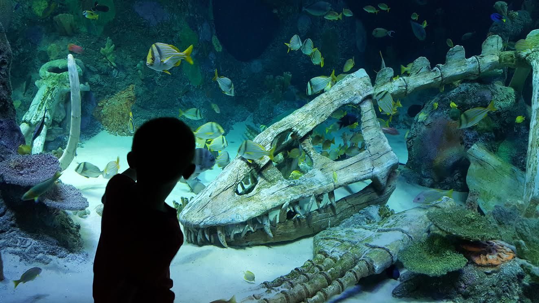 Family Attractions Kansas City Sea Life Aquarium