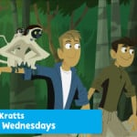Wild Kratts New Episodes in July 2015