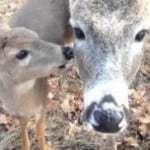 Free Christmas Reindeer Cam – Watch Santa Feed His Reindeer